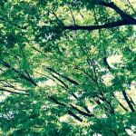木を見て森を見ずってやつ